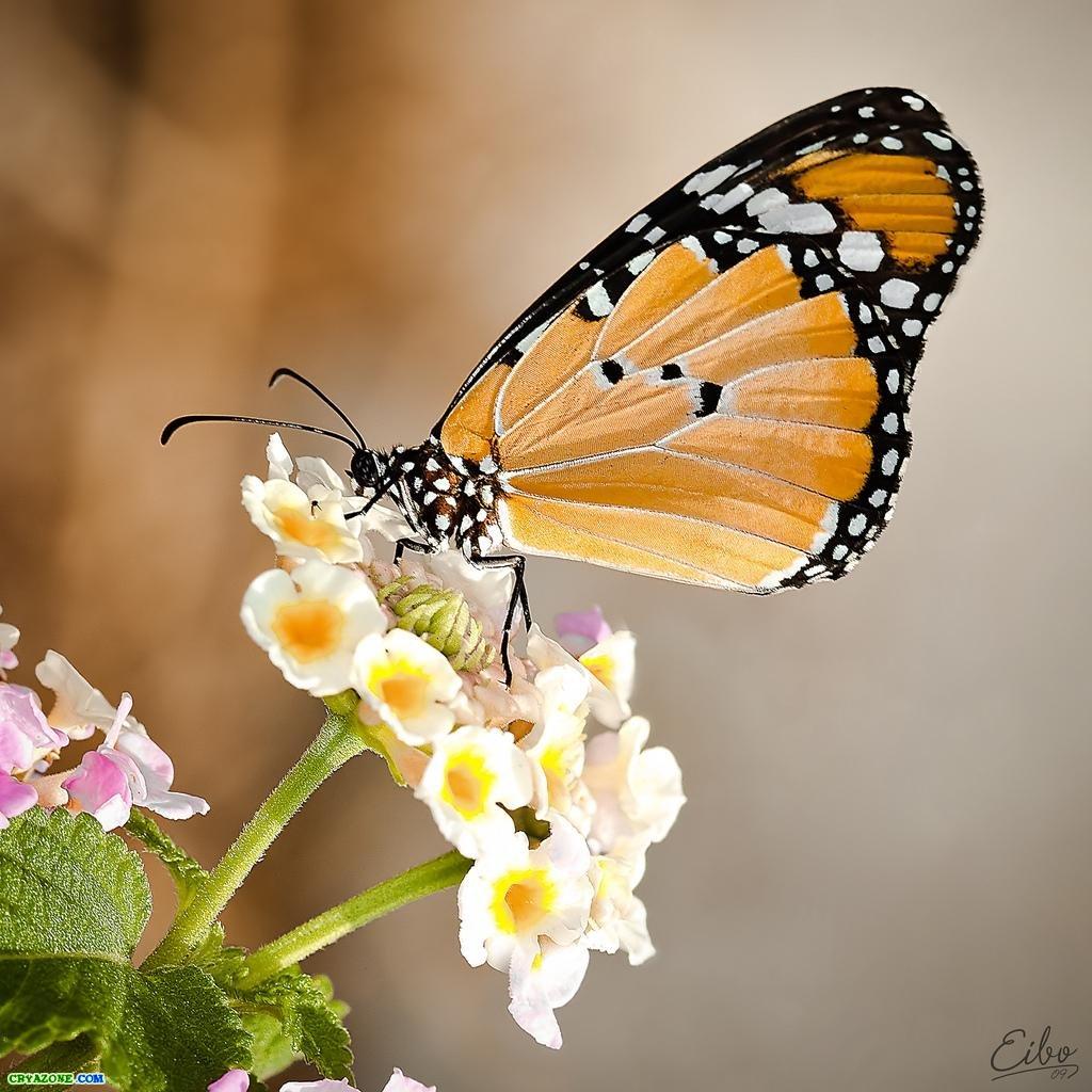 Открытка с бабочками анимация Золотой фон с бабочками блеск анимация - ФОНЫ бесшовные