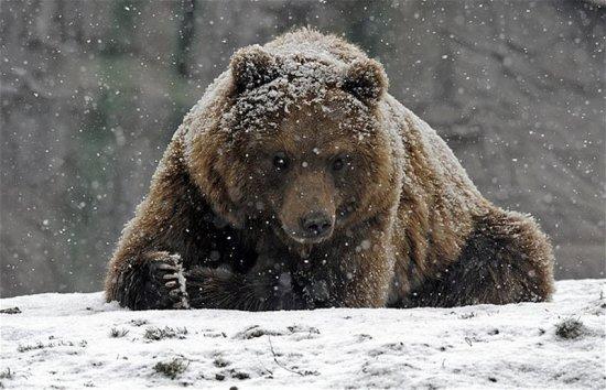 Первый снег для животных в этом году