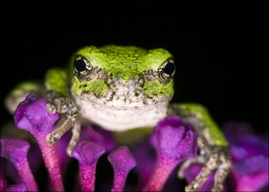 Животный мир от фотографа Patrick Zephyr