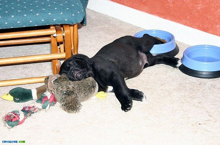 стоящий семи во сне прятаться от собаки квартиру Бугуруслане, профессиональная