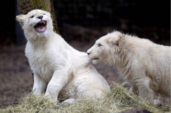 Отличные фотографии животных за последние недели