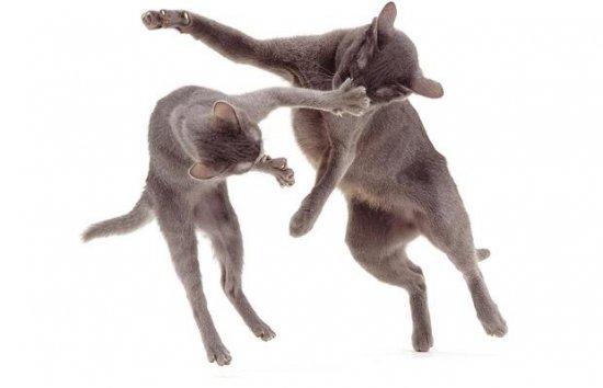 Коты и собаки от фотографа Jane Burton