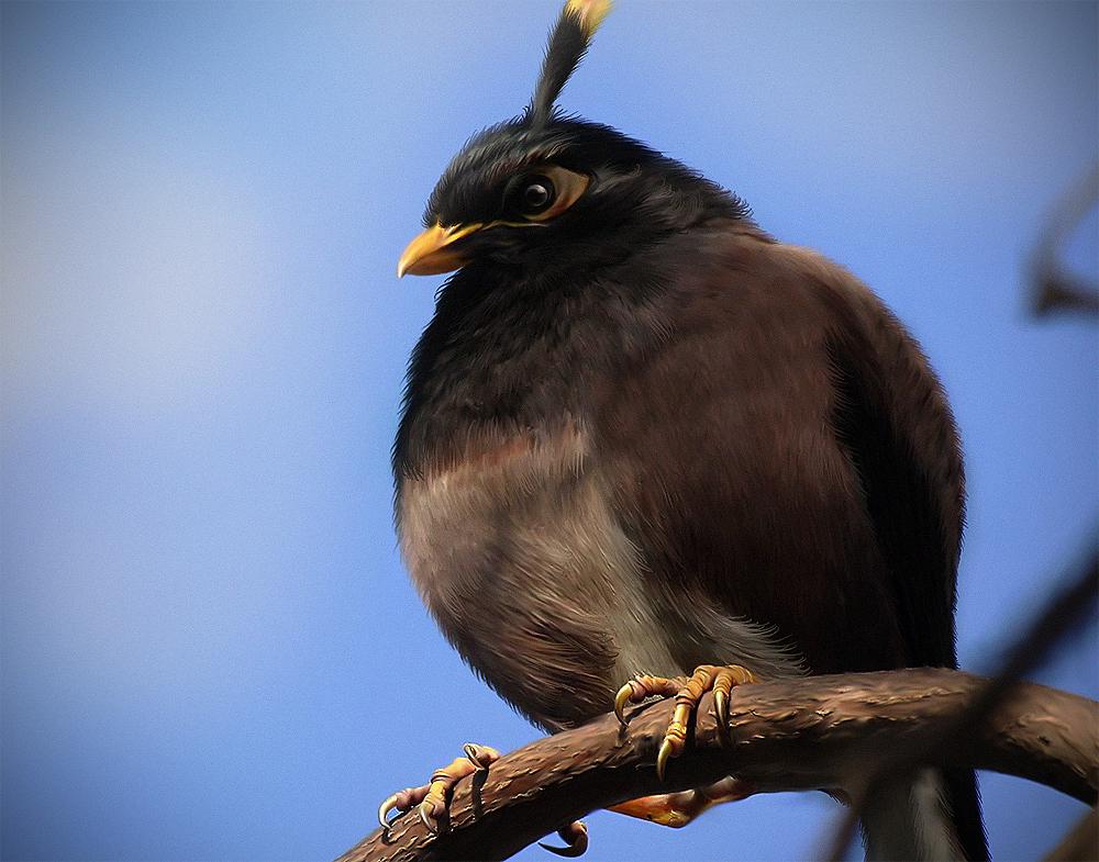 Реальные птицы похожие на angry birds