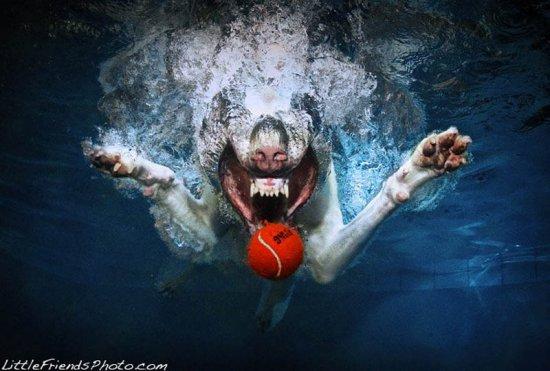 Собаки под водой от Seth Casteel